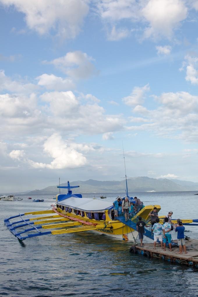 菲律宾海豚湾pg岛(puerto galera)潜水考证游记-海龟
