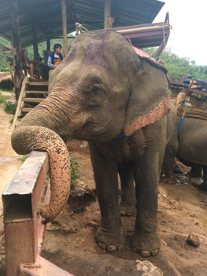 参观完便便屋,就坐车来到了骑大象的位子.  然后就开始了 骑大象.