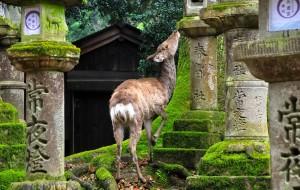 【关西图片】暴走关西160里---大阪-京都-奈良-名古屋超精简实用攻略