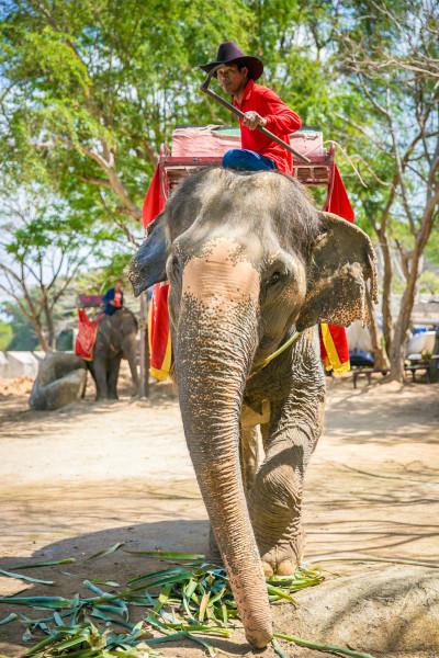 大象真是一种非常可爱的动物.