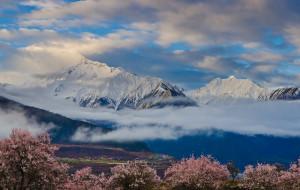 【日喀则图片】雪域 梵音 花语---2015早春西藏赏花