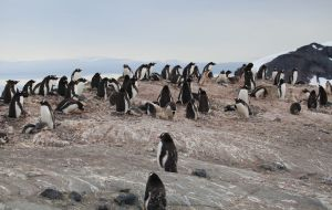 【南极半岛图片】南极(3)- 在动物世界里流连