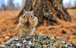 【海拉尔图片】追逐着呼伦贝尔之秋【迷恋那片金色森林】