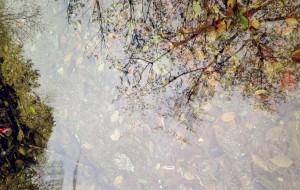 【黄陂图片】#花样游记大赛#木兰天池一日游