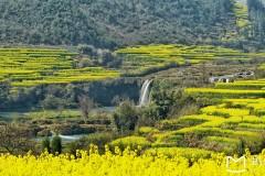 3月云南罗平油菜花攻略,兴义万峰林油菜花和元阳梯田游记。