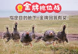 【活动】问答金牌抢位战,一战到底!(获奖名单公布)