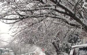 【温哥华图片】温哥华的白色圣诞