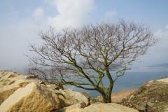 亿年沉淀的时间痕迹 — 徒步香港麦理浩径,看世界地质公园
