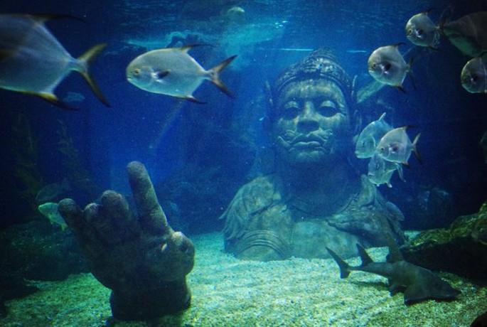 4. 暹罗海底世界(海洋馆)门票 4d电影 玻璃船【变身完成度100%】图片