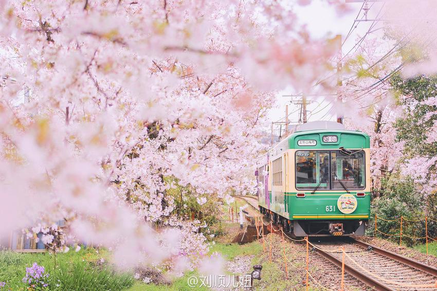 【岚山樱花隧道在哪】岚山樱花隧道怎么坐车,与岚山小火车有什么差别