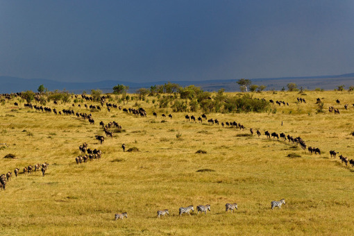 上午游览马赛马拉野生动物保护区
