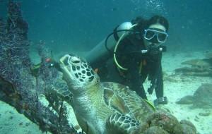 【海豚湾图片】周末打个飞的去潜水——菲律宾PG,随手可得的蓝色鸦片
