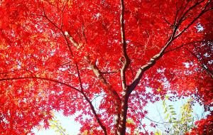 【庆州图片】#韩国#陪我度过那些年(首尔,江华岛,济州釜山庆州推荐和海量图片)