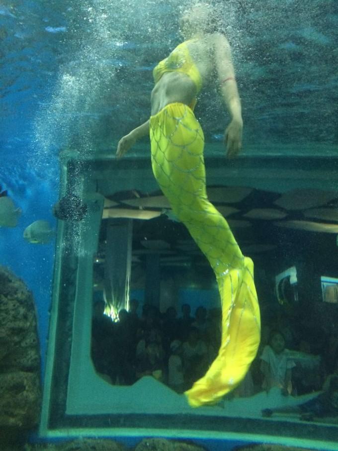 """极地海洋馆拥有目前国内最大的巨型圆柱海水缸,海洋生物馆将展出有""""活化石""""之称的海象鱼,鲸豚剧场:可同时容纳1800余人观看白鲸、海豚等珍惜海洋哺乳动物的精彩表演,由欢乐剧场、海洋科普体验馆、海洋文化商业广场、海洋5D影院等七大板块组成,是集旅游、休闲、餐饮、娱乐、购物等多种功能于一体的大型开放式海洋主题旅游乐园。"""