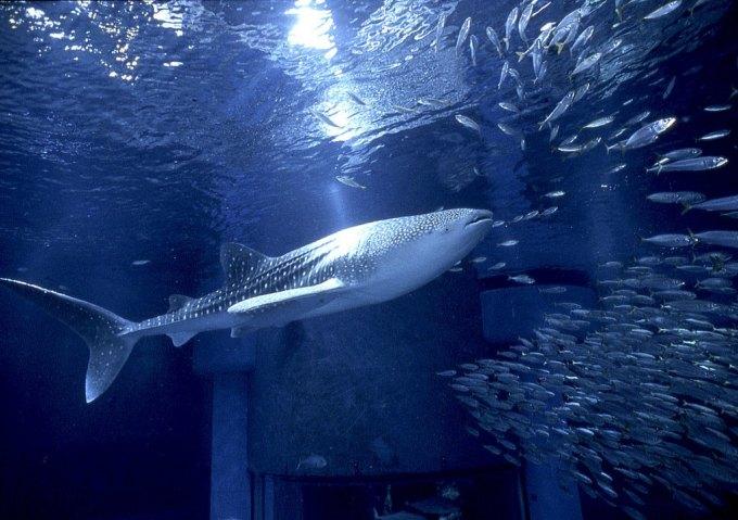 壁纸 海底 海底世界 海洋馆 水族馆 680_479