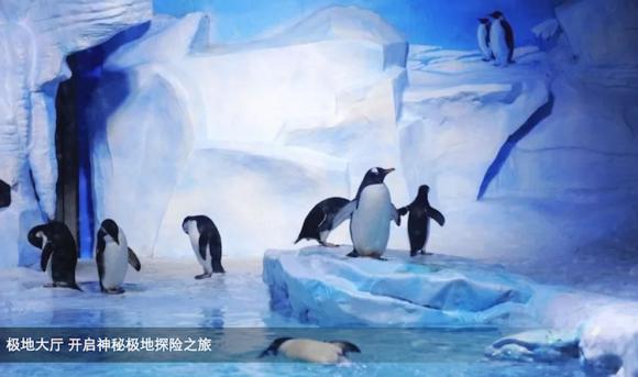 【必玩推荐,开启蓝色梦幻之旅】青岛海昌极地海洋世界