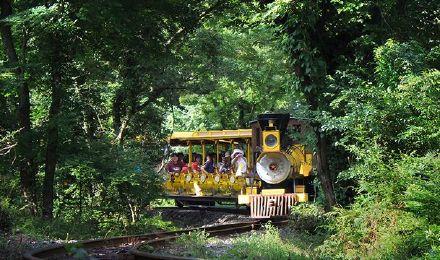 【一场穿越森林的呼吸之旅】济州岛森林小火车 水族馆