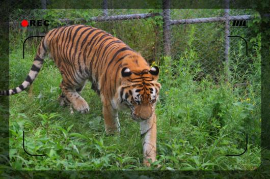 【哈尔滨出发】哈尔滨北方森林动物园一日游