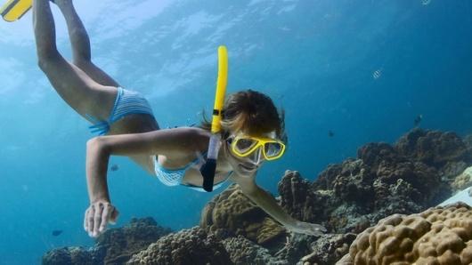 壁纸 海底 海底世界 海洋馆 水族馆 桌面 530_298