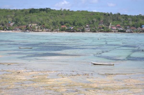 鲜牛奶加麦片     酒店的餐厅就在泳池旁边,晴空,流水,蓝天,爱人,人生几大乐事 早餐过后,回房间收拾东西: 潜水的话,最好是买一双脚蹼,因为怕潜水的时候碰到珊瑚会被刮伤(但实际验证过,如果是正常潜水,碰到珊瑚的可能性是不高的,除非你故意蹦跶,自己去踩它。因为有穿救生衣,有浮力,基本上你是浮在水面上看的情况多)但考虑到携带不方便,我们买的是潜水袜。 拍照的时候,潜水袜和脚蹼的腿长视觉 差距不是一丁点,如果你想显腿长,行李箱有空间,请选择脚蹼。  给你一个白眼,你自己领悟    从码头到蓝梦大需要坐船35