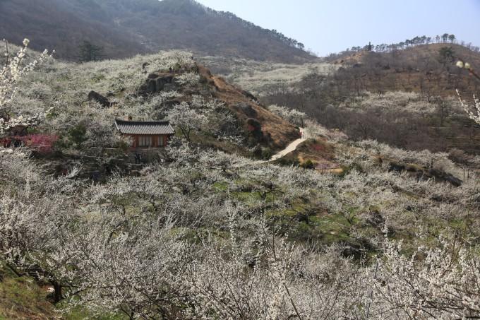 韩国光阳旅游风景照片