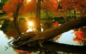 【额济纳旗图片】一千年的守望   只为等待你的到来---甘肃  内蒙九日游(2)