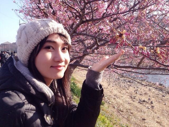 日本 本州 伊豆 河津樱花节 温泉之旅