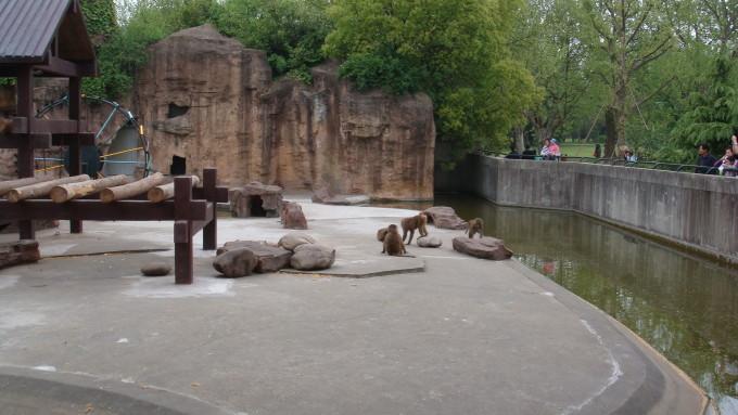 就一头大象 小袋鼠 食草动物区,就是臭 上海动物园,我觉得最适合可能