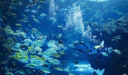 壁纸 海底 海底世界 海洋馆 水族馆 桌面 440_260