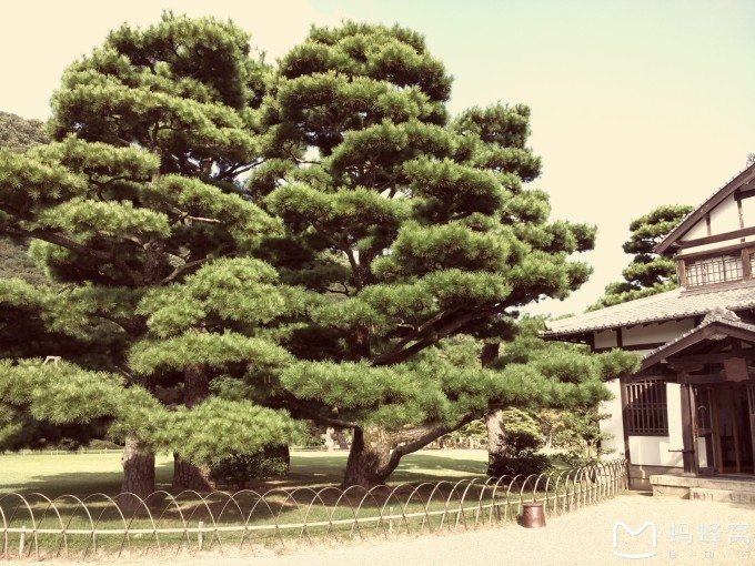 盆景 盆栽 树 松 松树 植物 680_510