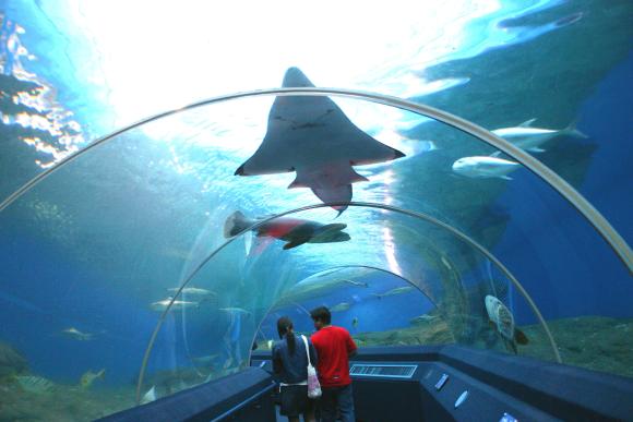 """水族馆在许多地方并不鲜见,新加坡和香港就各有一个世界知名的水族馆,泰国在大城府也有一个最大的淡水水族馆。 但芭堤雅""""海底世界""""是泰国首个海底水族馆,比新加坡圣淘沙水族馆的水容量还大。   泰国芭堤雅海底世界海洋馆是亚洲最大和最现代化的海洋馆,历时近一年半、耗资二亿七千五百万泰铢打造,面积达四千二百平方米。 一条堪称亚洲最长和最为艺术化的海底人行隧道,引导游客在四米深的海底进行令人着迷的旅行,观赏在身边和头顶翔游的海星、蟹、竹鲨、海马等二千多只海洋动物。  主题公园总占地面积 1."""