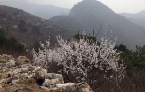 【迁安图片】万里长城——河北唐山迁安-----杏花满山的冷口