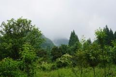立夏过后,雨映青城