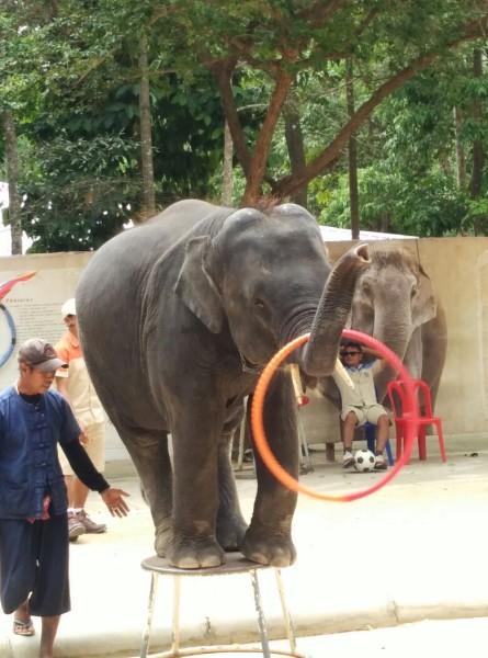 壁纸 大象 动物 445_600 竖版 竖屏 手机