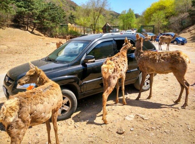 :北京八达岭野生动物