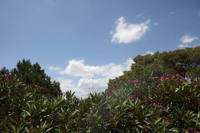 典型亚热带常绿硬叶林带——地中海气候区 休息区吃了一顿饱餐.图片