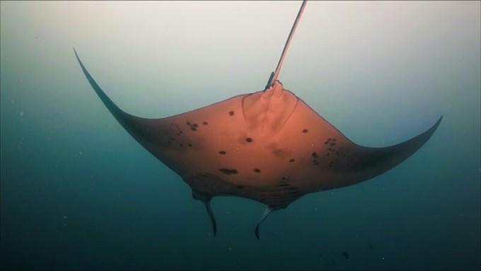 海底可爱动物四方连续