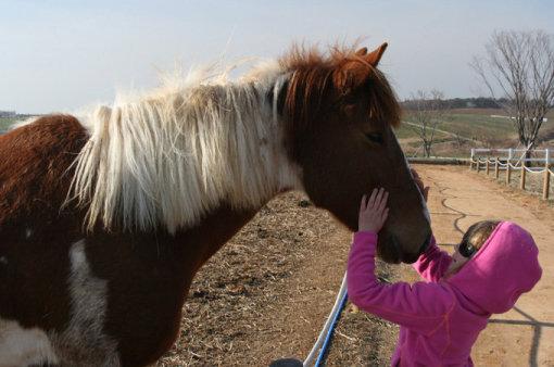 让孩子们和可爱的动物一起奔跑,让心灵和身体彻底放松.