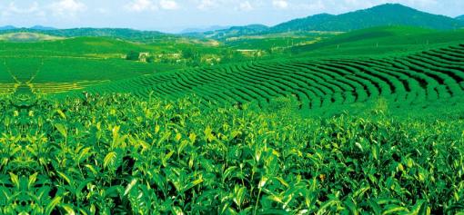 风景如画,民族风情浓郁的傣族村寨,与缅甸隔江相望,这里有水田百余亩