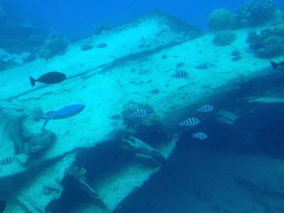 【带你去看看海底世界】塞班美人鱼号潜水艇观光