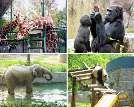 【唐山出发】北京动物园,海洋馆1日游,科普+观赏+娱乐