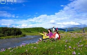 【四川图片】红原俄木塘--花的海洋