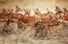 爸妈放心游之狂野⑧月/动物大迁徙/肯尼亚马赛马拉国家保护区+奈瓦沙湖+阿布戴尔国家公园8日/4人当地VIP定制小团(入住英女王下榻酒店-树顶·奈瓦沙游船·与长颈鹿亲密接触)