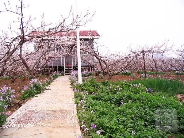 平谷桃花节