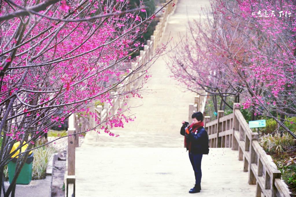 春天 到永福 赴一场浪漫的樱花约会
