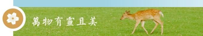 奈良:万物有灵且美