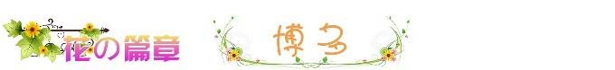 ❀ 花之篇章 - 博多